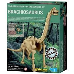 4M brachiosaurus-skelet