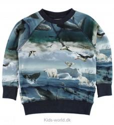 Molo Bluse - Romeo - Arctic Landscape