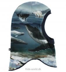 Molo Elefanthue - Nate - Arctic Landscape