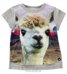 Molo T-Shirt - Erin - Lama