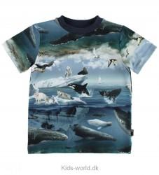 Molo T-shirt - Ralphie - Arctic Landscape