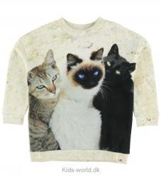 Popupshop Sweatshirt - Creme m. Katte